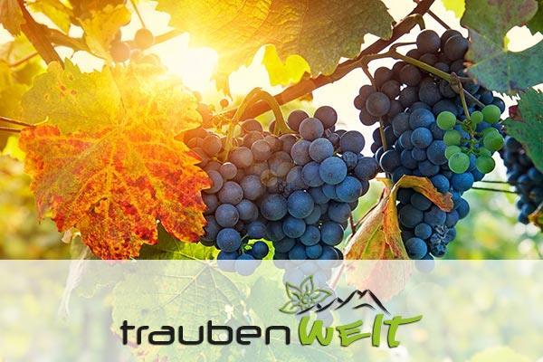 Traubenwelt